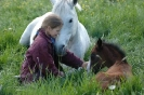Das New Forest Pony_18