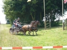 Das New Forest Pony_44