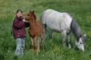 Das New Forest Pony_48